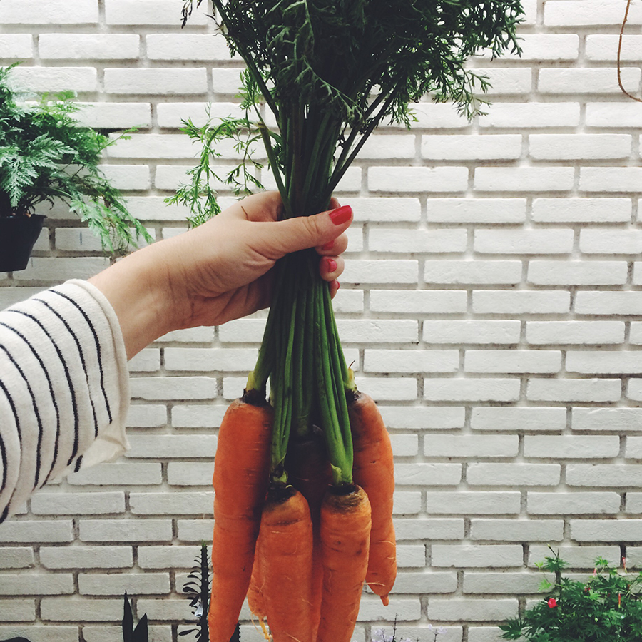 cenoura-limao-tomilho-amendoa-4